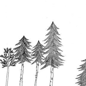 Bois|Tree