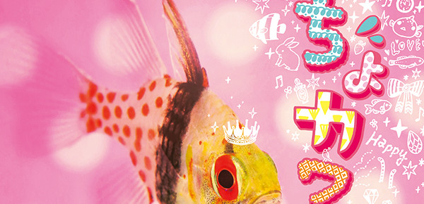 サンシャイン水族館|カワイイ展お仕事